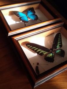 cadres papillons 2