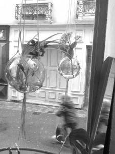boules vitrine nb